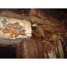 termite-damage-in-walls