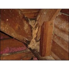 termites.com-damage-to-wood-wall