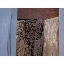 termite-damage-door-closeup