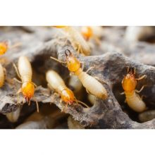 termite-damage-main